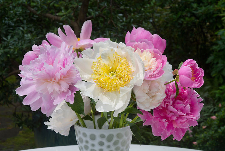 Flower Arrangement Of Cut Peonies In Vase On Table