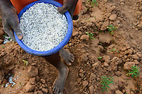 MALAWI, Thyolo, village Samuti, Farmer applies synthetic fertilizer in vegetable field, the Malawi government has subsidized synthetic fertlizer under Farm Input Subsidy Programme FISP to increase the yields / MALAWI, Thyolo, Dorf Samuti, Farmer bringen synthetische Duenger aus, die malawische Regierung hat mit einem Düngerprogramm synthetische Dünger über Jahre hoch subventioniert um Ertraege zu steigern