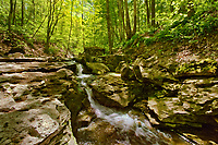 Sixteen Mile Creek. at Louth Falls. Carolinian Forest in spring.<br />