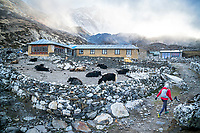 A trail runner leaving Chukhung to begin the 3 Passes tour. Khumbu Valley, Nepal.