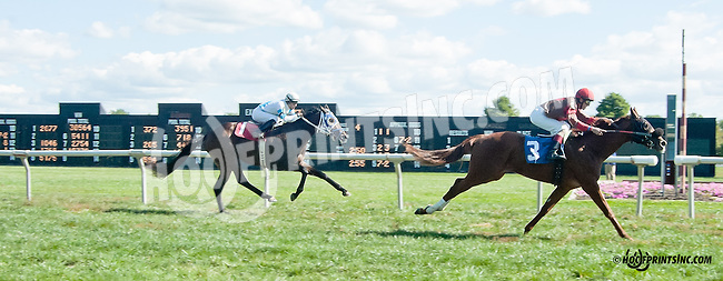 Arden Natalie winning on 9/28/13 at Delaware Park