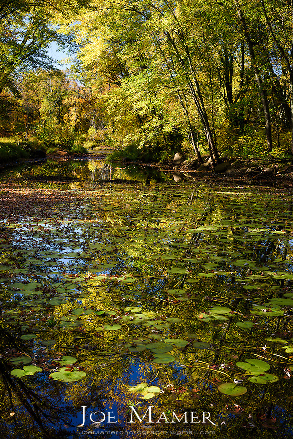 Lilly pad covered backwater along the Kettle River in St. Croix State Park.