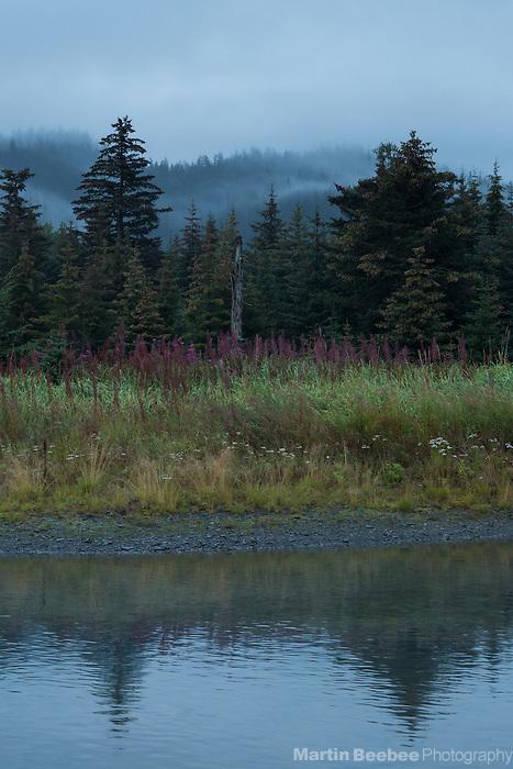 Mist and trees outside Seward, Alaska