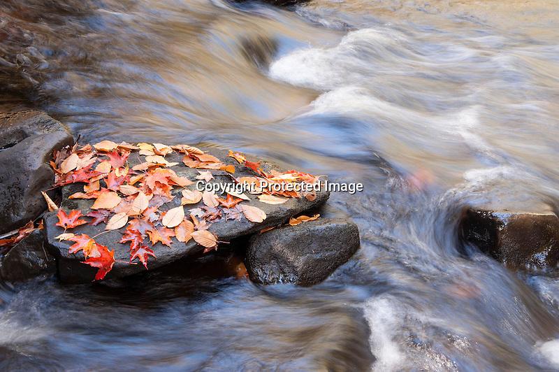 Island of Leaves in Brook