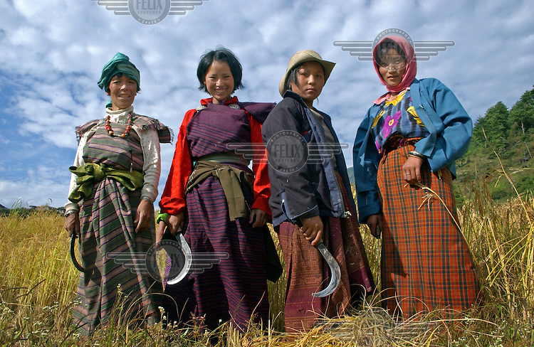 Women harvest rice in the fields of Karmeling Hotel owner Richin Wangmo in Trashi Yangtse village in Eastern Bhutan.