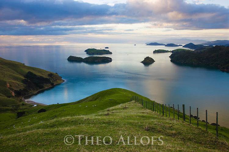 Hilly sheep meadows on east coast of Coromandel Peninsula, North Island, New Zealand