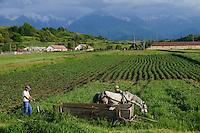 ROMANIA Transylvania Voila, farmer with horse and plough  / RUMAENIEN Transsilvanien Siebenbuergen, Voila, Bauer mit Pferd und Pflug, Hintergrund Fagaras Gebirge