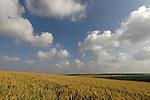 Israel, Shephelah region. Fields by route 353