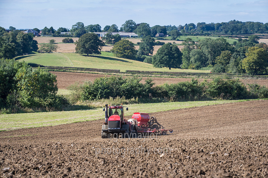 Drilling winter wheat with Case Quadtrac 535 and a 6m Sumo Versadrill - Pickwell, Leicestershire, September