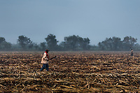 A worker cuts rotten stubs of sugar cane stalks on a harvested field near Florida, Valle del Cauca, Colombia, 25 May 2012. The Cauca River valley is the booming centre of agriculture and sugar cane cultivation in Colombia. Although the main part of the crop is still refined into a sugar, the global demand of biofuel and ethanol has intensified the sugar cane production in the last years. 85 percent of Colombia's cane crop is still harvested the manual way, employing approximately 30,000 workers. Working six days a week, under harsch labor conditions, the sugar cane cutters earn $4 for every ton of cane they cut, with no access to social benefits due to the tricky system of intermediary contractors and cooperatives.