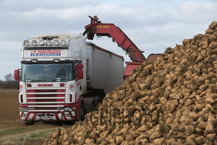Lorry being loaded with the final beet of the 2014_2015 campaign<br /> Picture Tim Scrivener 07850 303986