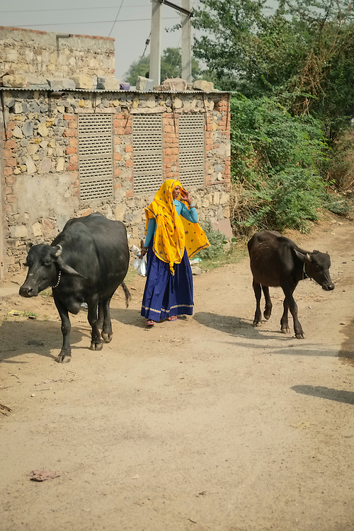 Darkly colored cows and a brightly clothed woman contrast on this dirt side street in a small village in Rajasthan.