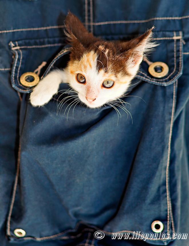 A small kitty inside a pocket