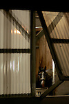 A horse stands in his barn following a morning workout at Churchill Downs in Louisville, Kentucky on May 5, 2006...