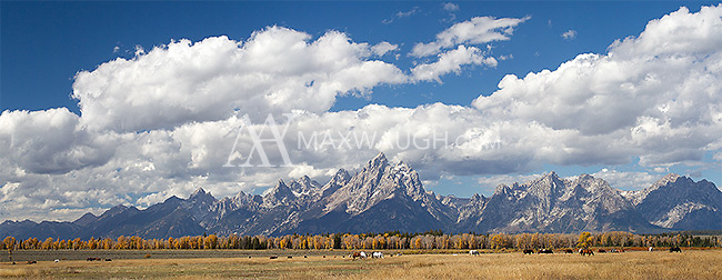 Horses graze before the Grand Tetons.