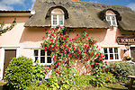 Rambling red rose climbing pink washed wall of old country building