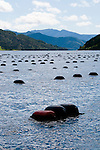 New Zealand, South Island, Green Mussel Cruise out of Havelock, Marlborough, on ship Odyssea to see mussel farming and scenery in Kenepuru Sound. Photo copyright Lee Foster. Photo #126173