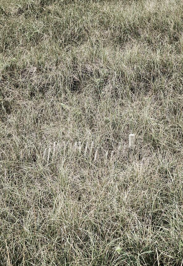 Wind fence in coastal dune grass.