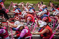 Today is raceday number two.  IBCPC Dragon Boat Festival i Firenze er en dragebådsfestival for brystkraftramte kvinder. Copenhagen Dragonboat Team deltager med godt 20 kvinder i alderen fra 25 til 62.<br /> <br /> Foto: Jens Panduro<br /> <br /> The IBCPC Dragon Boat Festival is held every four years under the auspices of the International Breast Cancer Paddler's Commission. The Festival is an international non-competitive participatory event targeting Breast Cancer Survivors teams who engage in Dragon Boat activities as post-operative rehabilitation. Born from the idea of a Canadian sports medicine physician, Doctor Don McKenzie about twenty years ago, Dragon Boat paddling has become a rehabilitation therapy for tens of thousands of men and women worldwide, who have undergone surgery.<br /> For the first time since its institution in 2005, the IBCPC FESTIVAL will be held in Europe – in Italy!! The Florence 2018 Festival will involve 129 teams from 17 countries , and for the very first time ALL the continents are represented.<br /> Organised and promoted by FIRENZE IN ROSA Onlus as the official Organising Committee, the Florence Festival will be a sporting event but above all a social occasion in which Florence will welcome from 4,000 to 5,000 people from all over the world. The participants are mainly women between the ages of 20 and 80, who will meet to take part in the exciting Dragon Boat races, paddling together on the Arno. They will also be accompanied by their friends and family, their faithful and enthusiastic supporters.