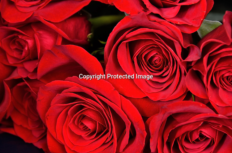 Bouquet of love roses stock photo