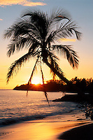 Coconut palm and Hekili Point<br />