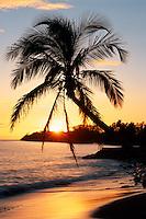 Coconut palm and Hekili Point<br /> Island of Maui<br /> Hawaii
