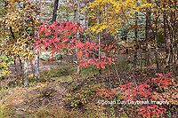 63895-16118 Fall color Garden of the Gods Recreation Area Shawnee National Forest IL