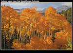 Autumn aspen tree are an icon of Colorado. Visit the last week in September and early October.<br />