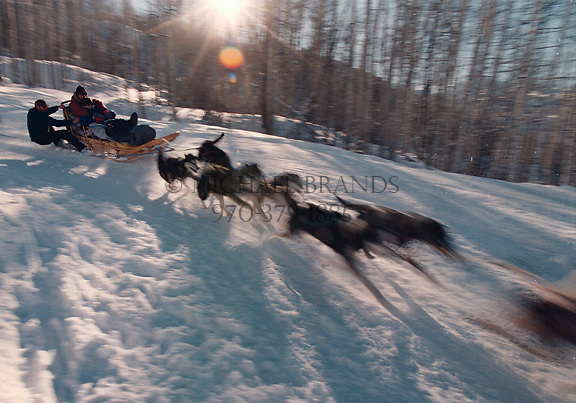 Dog sledding tour in Snowmass originating from Krabloonik kennel. © Michael Brands. 970-379-1885.