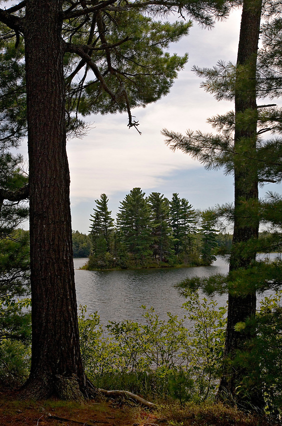 Large pines grow along the shore of Deer Island Lake at Sylvania Wilderness Area of Ottawa National Forest near Watersmeet Michigan.