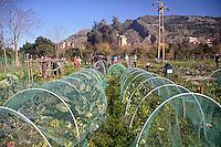 Palermo: l'orto urbano condiviso nella periferia nord.<br /> Palermo:community  garden within the city.