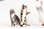 20170304 Kittens Studio