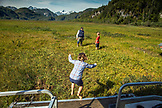USA, Alaska, Redoubt Bay, Big River Lake, playing on the floating marsh near Redoubt Bay