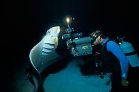Bob Cranston films reef manta ray, Manta alfredi, known as Mollie the Manta, feeding on plankton at night, Little Cayman Island, Cayman Islands, Caribbean Sea, Atlantic Ocean