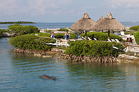 Dolphin Watch at Hawks Cay Resort, Duck Key, Florida, May 29, 2012 ... photo by Debi Pittman Wilkey