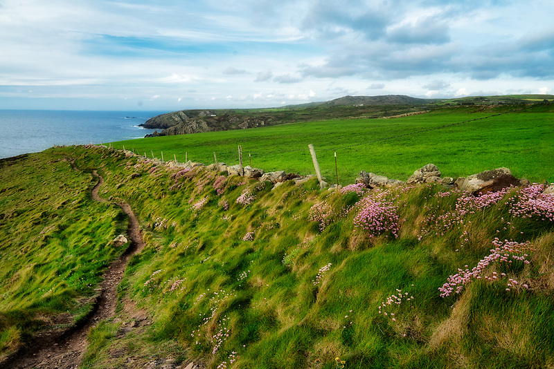 Path along Cormwall coast with Sea Thrift blooming along fence line. England