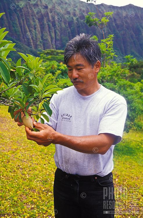 Frankie's Nursery, Franki Sekiya with sapodilla fruit tree, Waimanalo