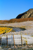 Vineyards, Grapes, & Ice Covered Grapes
