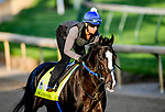 LOUISVILLE, KENTUCKY - APRIL 27: Long Range Toddy, trained by Steven Asmussen, exercises in preparation for the Kentucky Derby at Churchill Downs in Louisville, Kentucky on April 27, 2019.  John Voorhees/Eclipse Sportswire/CSM