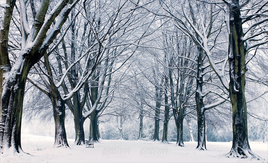 Promenade of trees in snow on Clifton Down, Clifton, Bristol