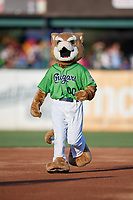 Kane County Cougars mascot Ozzie during a Midwest League game against the Dayton Dragons on July 20, 2019 at Northwestern Medicine Field in Geneva, Illinois.  Dayton defeated Kane County 1-0.  (Mike Janes/Four Seam Images)