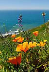 Wildflower Edits