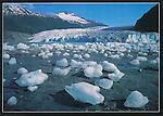 FH 215, Mendenhall Glacier, icebergs