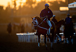 OCT 30: Breeders' Cup Distaff entrant Street Band, trained by J. Larry Jones, at Santa Anita Park in Arcadia, California on Oct 30, 2019. Evers/Eclipse Sportswire/Breeders' Cup