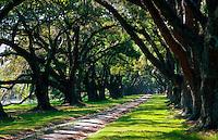A boulevard of Oak trees.
