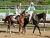 Avvatar before The Delaware Park Arabian Juvenile Championship (gr 3) at Delaware Park on 9/28/13