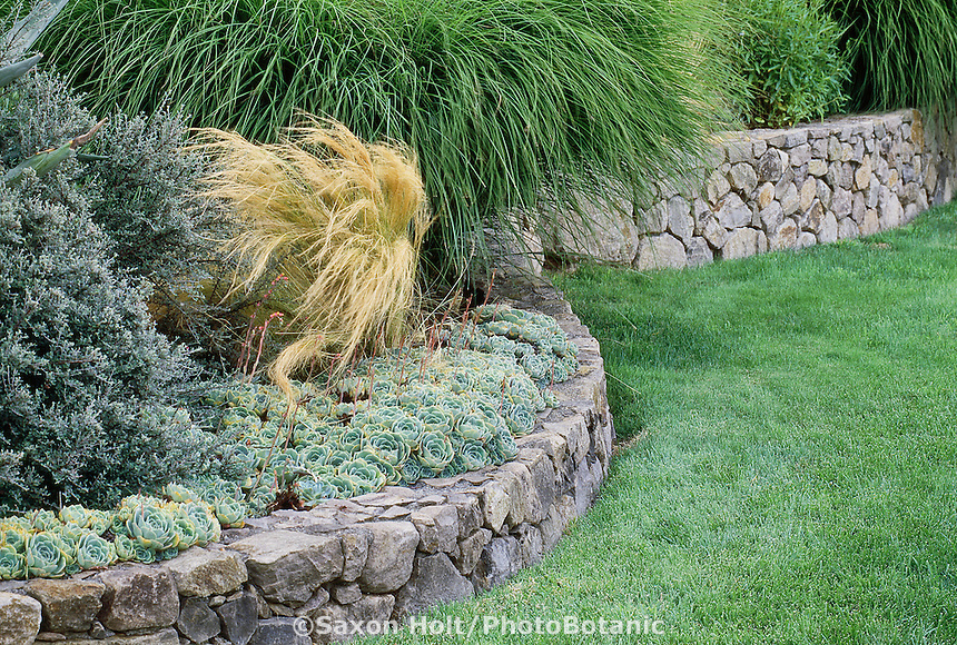 Holt 813 photobotanic stock photography garden for Rock wall garden designs