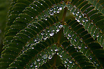 Waterdrops on trees, bushes, plants, spiderwebs and weeds.   ©2012. Jim Bryant Photo. ALL RIGHTS RESERVED.