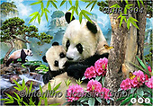 Howard, SELFIES, paintings+++++,GBHR904,#Selfies#, EVERYDAY ,panda,pandas