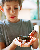 PERU, Amazon Rainforest, South America, Latin America, boy holding a grasshopper